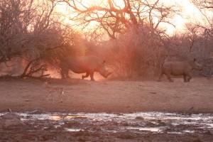 090910_Kruger Sept 2010_2488