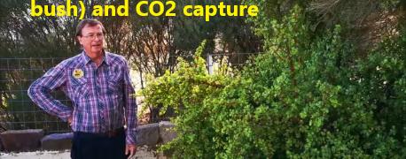 Portulacaria afra (elephant bush) and carbon capture